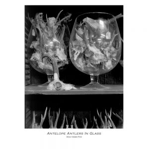 Antlers-in-glass