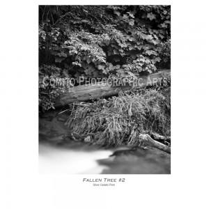 Fallen-Tree-2-copy