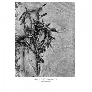 kelp-footprints