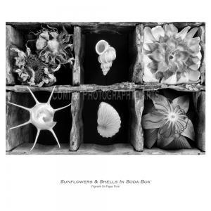 Soda-Box-Still-Life-031