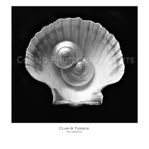 Clam-and-Turbo