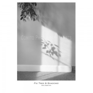 Fig-Tree-shadows