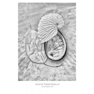 Leaf Three Shells