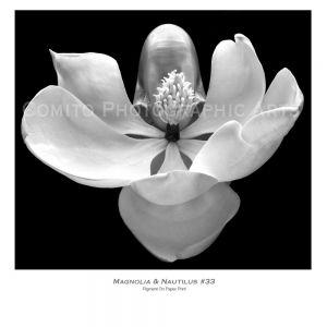 Magnolia-n-Nautilus-33